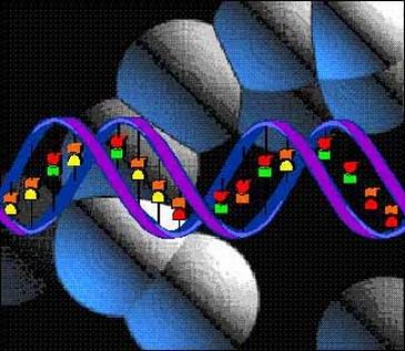 A-human-dna-sequence