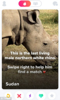 Tinder rhino profile post