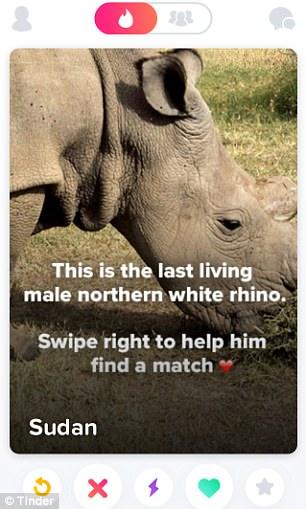 Tinder rhino profile post